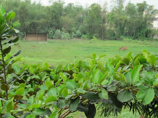 Thien Thanh Boutique Hotel: 朝食会場からの眺め