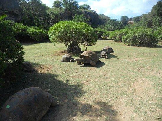 Francois Leguat Giant Tortoise and Cave Reserve