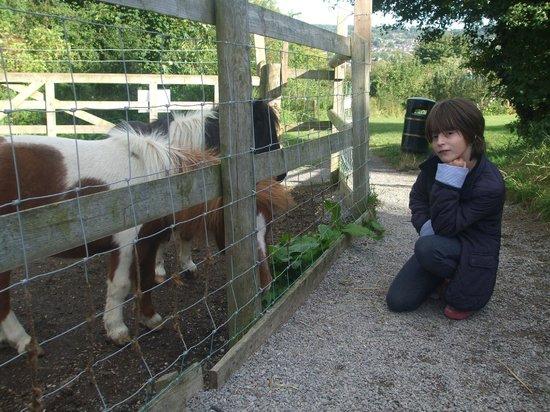 Bath City Farm: shetland ponies