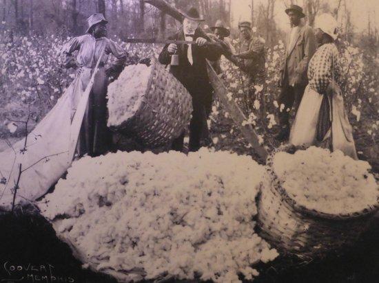 The Cotton Museum at the Memphis Cotton Exchange: Exhibit