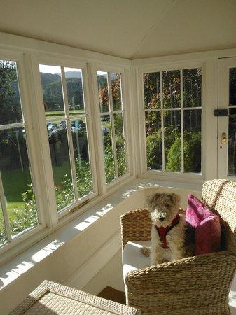 How Foot Lodge: Daisy enjoying the sun
