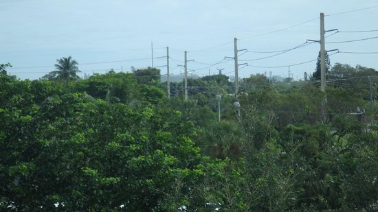 Candlewood Suites Ft. Lauderdale Air/Seaport : View of Port Everglades (above tree line) from 4th floor room/east side
