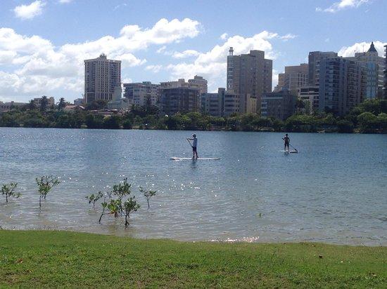 The Condado Plaza Hilton : Lagoon