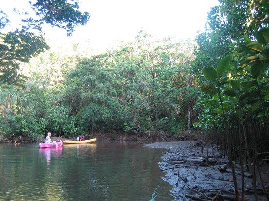 Kingfisher Park : Kayaking in the mangroves