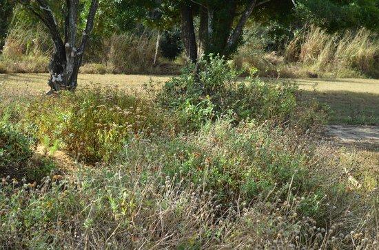 Hallstrom Farmstead: wildflower garden gone to seed in the fall