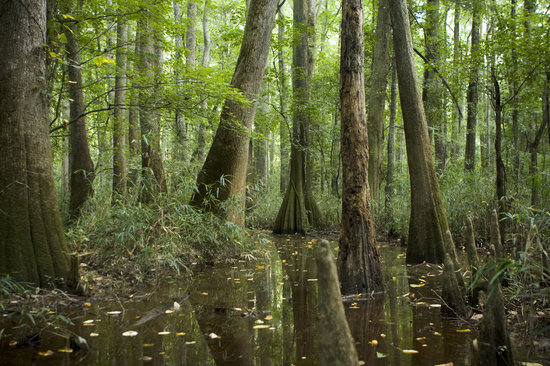 Columbia, SC: Congaree National Park