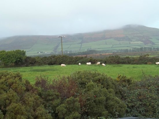 Dunlavin House: Had to check in with the sheep every day.