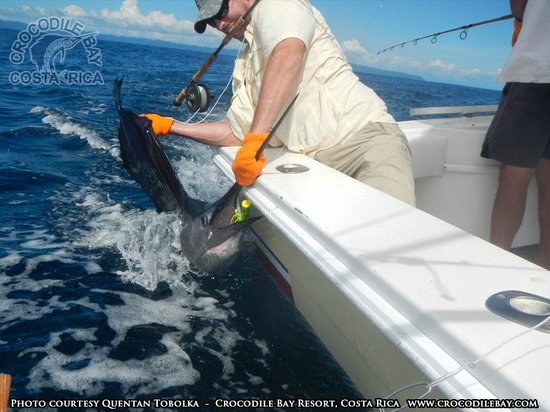 Crocodile Bay Resort : Sailfish on the Fly