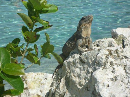 Secrets Maroma Beach Riviera Cancun: Pool guests