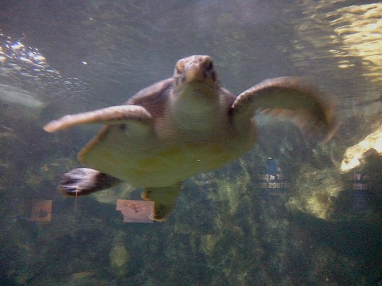 Tortue picture of aquarium de la guadeloupe le gosier for Aquarium tortue