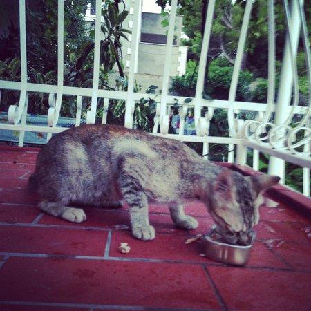 Villa Anka: Коты на балконе
