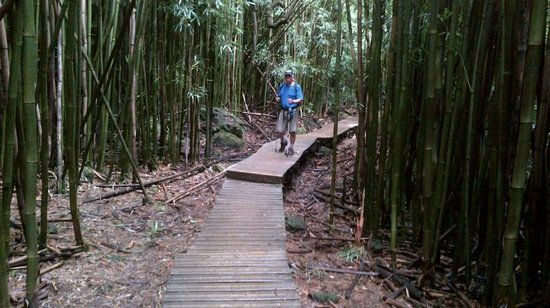 Pipiwai Trail: Bamboo forest boardwalk