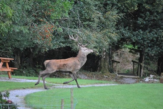 Friars Glen: Watching Red Stag from the breakfast sun room.