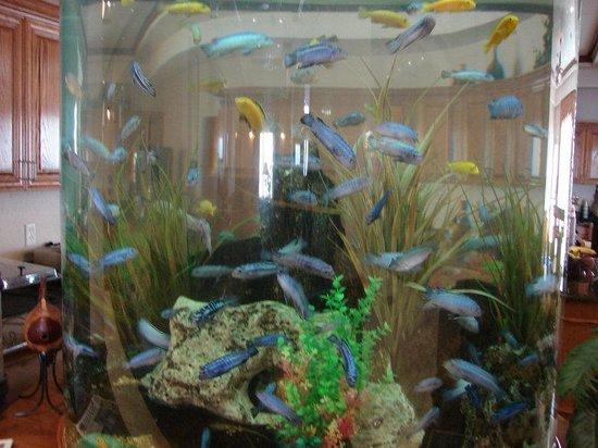 BEST WESTERN PLUS Northshore Inn: Lobby Fish Tank