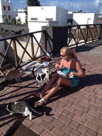 IBEROSTAR Lanzarote Park : feeding the cats near the market