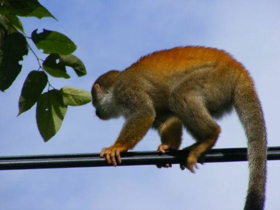 Villa Kristina Apartments: monkeys on the wires