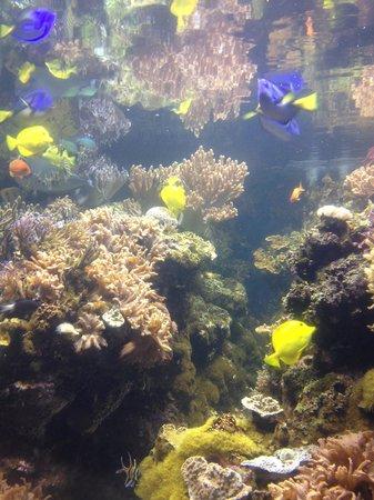 National Aquarium: Tropical fish
