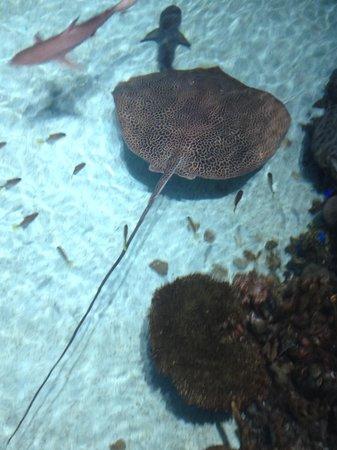 National Aquarium: Stingray