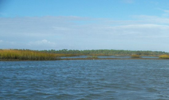 Island Hopper Boat Charters: Oyster beds