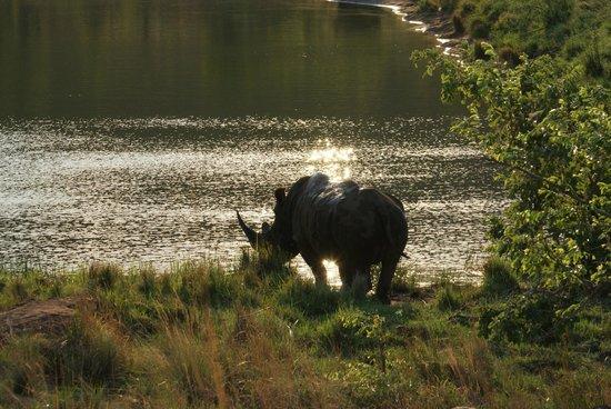 Nungubane Game Lodge : Prachtige neushoorns!