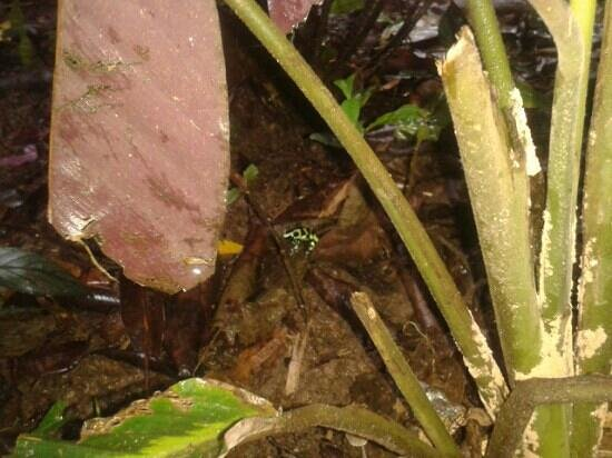 Hotel Shawandha Lodge : frog in the resort