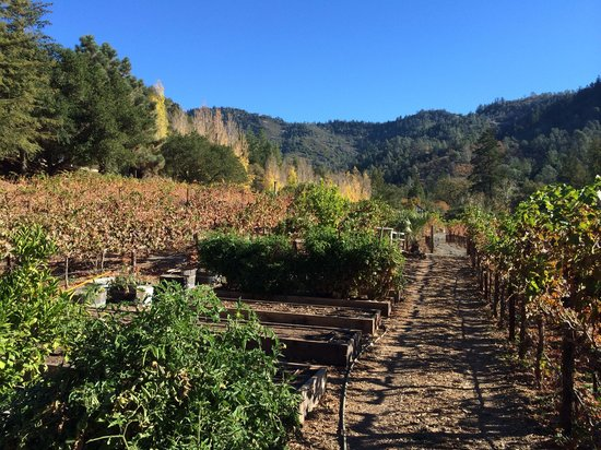 Calistoga Ranch, An Auberge Resort: Vineyard and garden