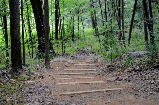 Northwest Woods - Picture of Van Cortlandt Park, Bronx - TripAdvisor