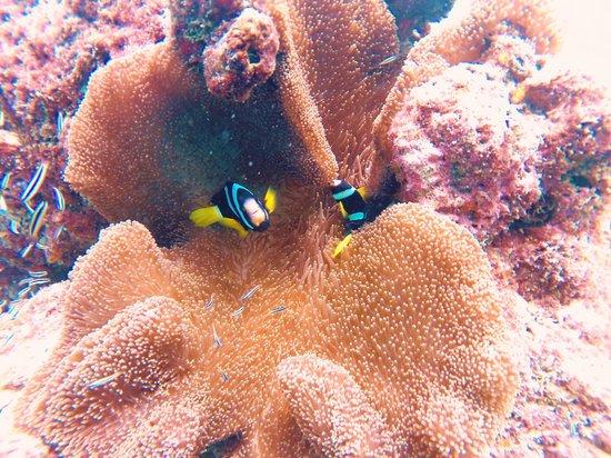 Maafushi Dive & Water Sports : hei :-)