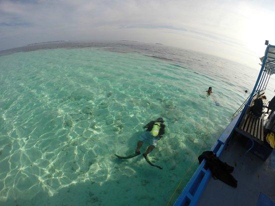 Maafushi Dive & Water Sports : tur