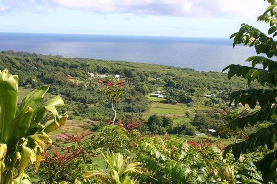 Hana Highway - Road to Hana: View from the road