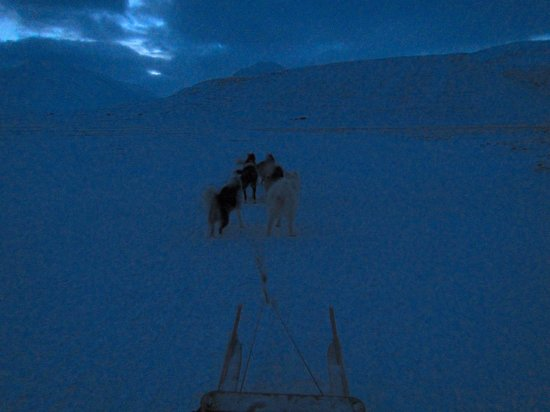 Green Dog Svalbard: Two adults and a sled...no problem for these guys and girls