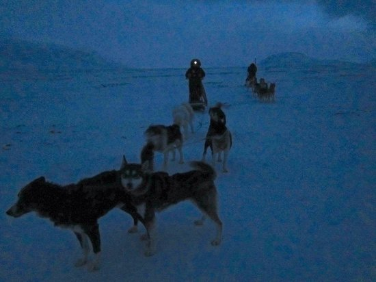 Green Dog Svalbard: Fantastic experience being able to drive