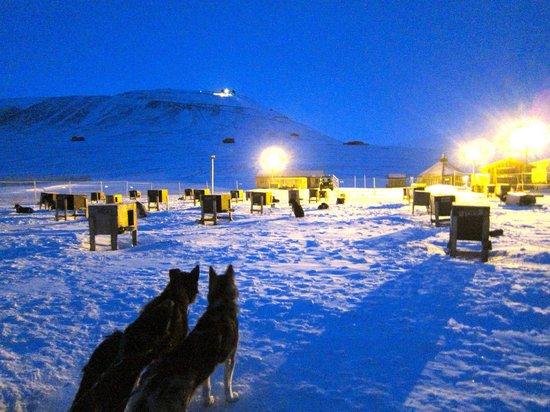 Green Dog Svalbard: The beautiful blue of the polar night