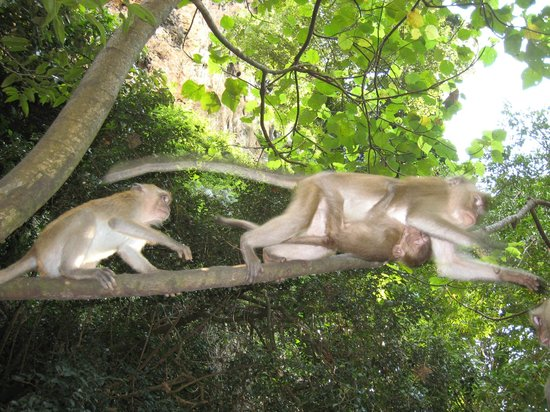 PhraNang Cave Beach: macaque monkeys on the path to the beach