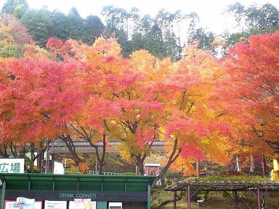 Hieizan Driveway: 紅葉