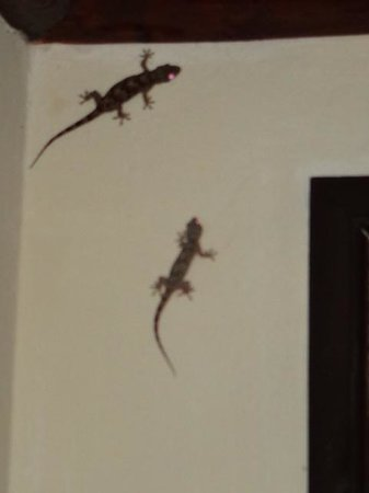 Sarova Shaba Game Lodge: Lizards in Room