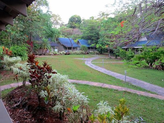 Ferntree Rainforest Lodge: View from our cabiin