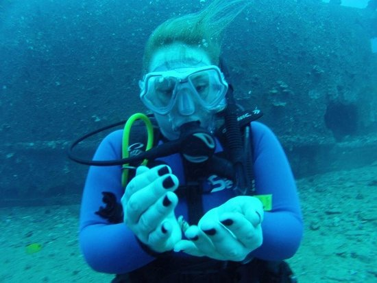 Ocean Legends Dive Center: Awesome experiance.