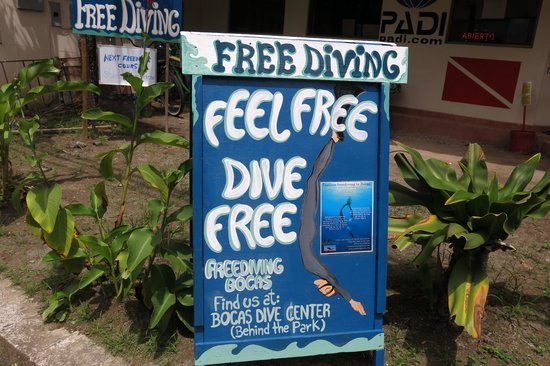 Freediving Bocas Day Course