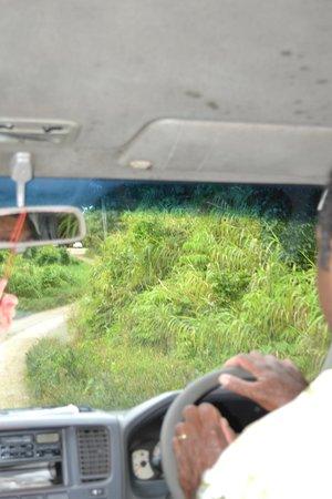 Mango Bay Resort Fiji: Tte hacia el hotel
