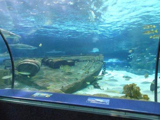 Sharks Napping Picture Of Ripley 39 S Aquarium Myrtle
