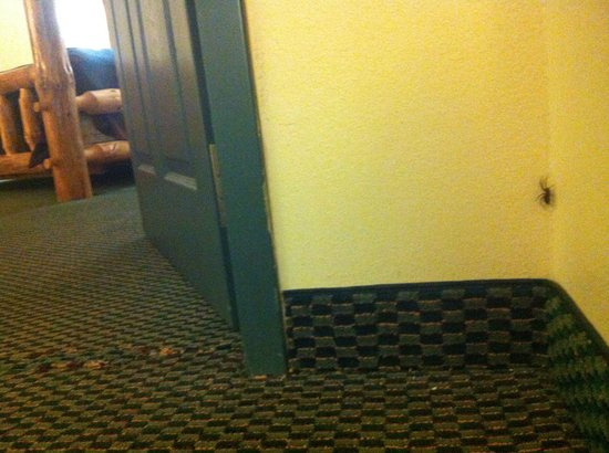 Kansas City, KS: We had an unwanted guest staying with us in October. Rooms really need an update. Old carpet ugl