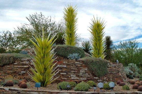 Chihuly Picture Of Desert Botanical Garden Phoenix Tripadvisor