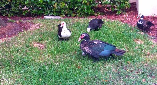 La Quinta Inn Ft. Lauderdale Tamarac East : Ground area