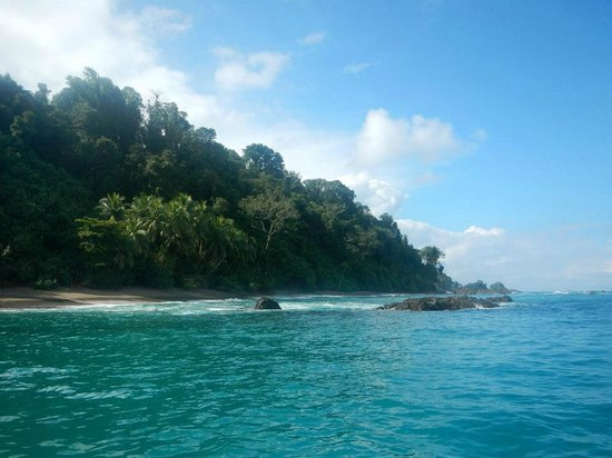 Copa de Arbol Beach and Rainforest Resort: View from the private beach