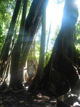 Copa de Arbol Beach and Rainforest Resort : Rainforest