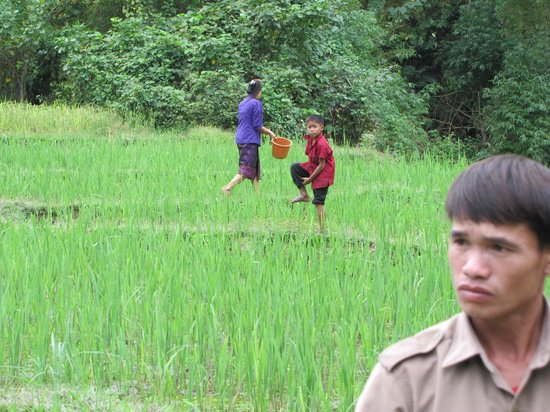 Kamu Lodge : Las plantaciones de arroz