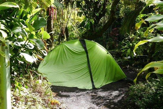 Hilo Tropical Gardens : Tent area