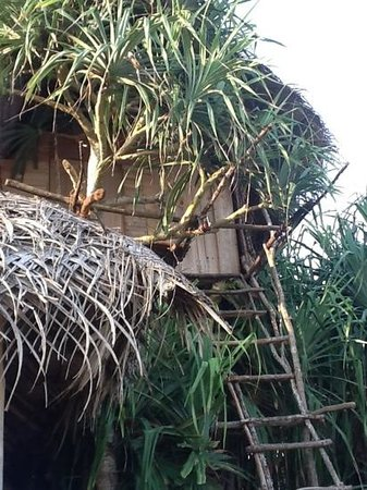 Cinnabar Resort: tree house
