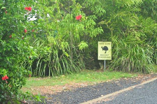 Mission Beach : sinal dos ultimos pontos de avistamento de cassowaries
